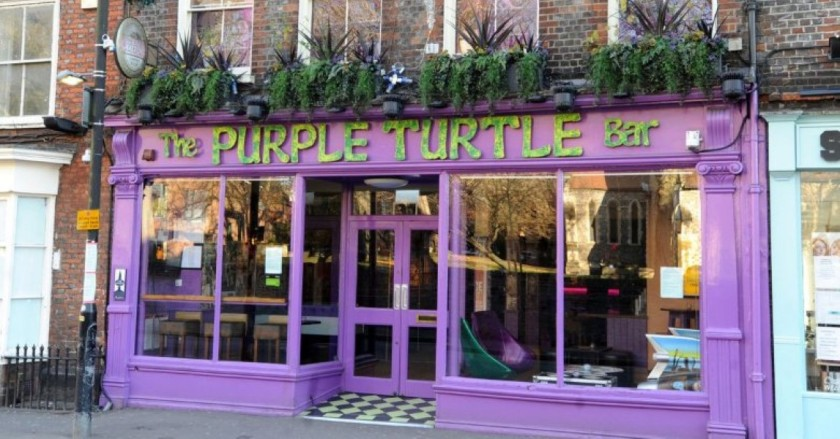 purple-turtle-reading